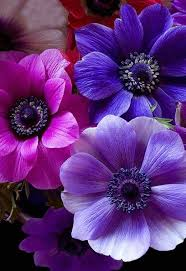 Colors Of Purple Best 25 Pink And Purple Flowers Ideas On Pinterest Peony