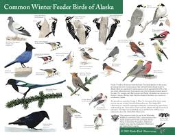 bird feeding in alaska image with charming backyard bird sanctuary