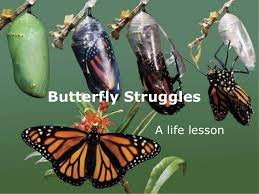 butterfly struggles an inspirational lesson