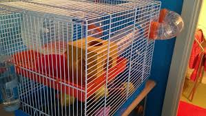 How Much Is A Hamster Cage Best Cage For A Dwarf Hamster U2013 What They Love