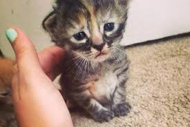 Sad Cat Memes - purrmanently sad cat the adorable kitten that will break your heart