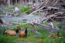 landscape fragmentation and wildlife habitat