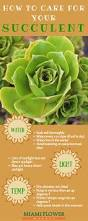 different types of succulents one day pinterest plants