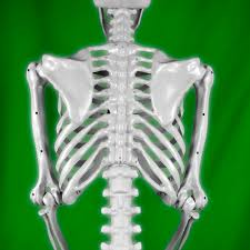 Halloween Skeleton Prop by Realistic Posable Skeleton Prop 5ft 379705 Trendyhalloween Com