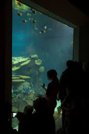 the 29 best images about the toledo zoo aquarium on pinterest