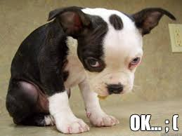 Sad Okay Meme - image gallery okay sad puppy meme