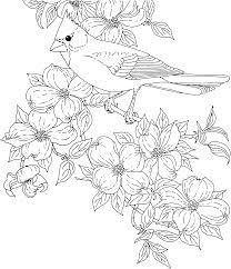 bluebonnet flower coloring page paginone biz