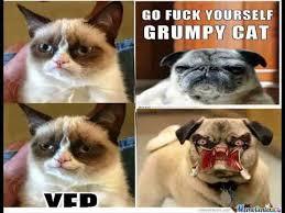funny cat f funny cat birthday ecards youtube