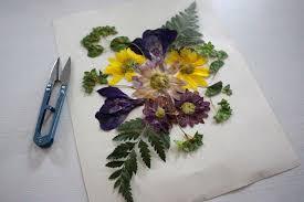 pressed flowers iron pressed flower botanical prints at cloverhill