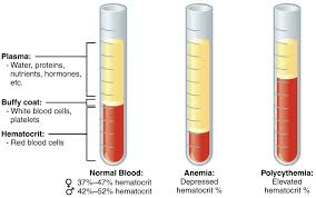 an overview of blood anatomy and physiology