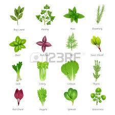 herbe cuisine composition indienne herbes d épices avec jeu d icônes isolé de