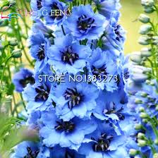 delphinium flowers aliexpress buy 2016 30pcs blue mixed colourful rocket