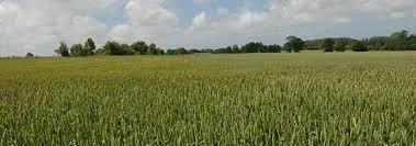 chambre agriculture du nord valeur vénale de terres agricoles chambre d agriculture du nord