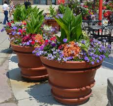 Summer Container Garden Ideas Large Containers Summer Annuals Sun Repetition Of Design