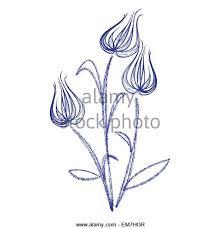 tulip flower illustration drawing engraving stock photos u0026 tulip