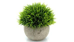 plant for office best office plant smart home keeping