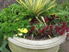 Tropical Flowers And Plants - types of tropical plants plants for a tropical garden hgtv