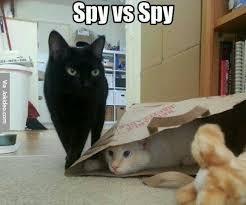 Spy Meme - spy vs spy cat meme