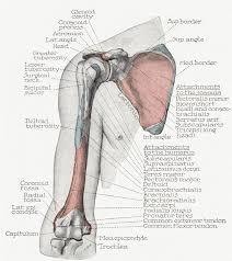 Supraglenoid Tubercle Shoulder