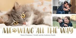 pets holiday cards walgreens photo
