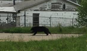black bear spotted in neighborhoods in northeast ohio county