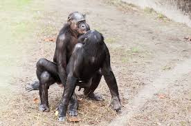 Sexy Monkey Meme - how does your sex drive compare to these animals