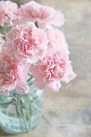 Chic Flower Pink Carnations In Mason Jar 8x12 Fine Art Nature Photography