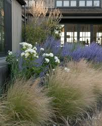 image result for boxwood and mexican feather grass 5 bpc
