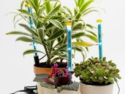 led lights for indoor plants how to keep plants alive using led light spikes