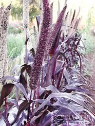 diy patio planter and shades gardenista