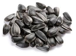 sunflower seeds u2013 agrograin impex ltd