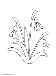 click to see printable version of saffron crocus coloring page i