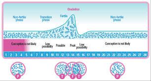 ferning pattern in spanish saliva ovulation tester