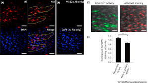 the endothelium solves problems that endothelial cells do not know