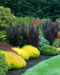 garden design with using contrast as a guide in landscape design