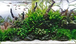 Aquascaping Shop Aquarium Gardens Store Display Aquascapes