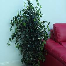 london house plants house plants delivered anywhere in the uk