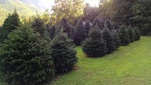contact us fir heaven sake christmas tree farm