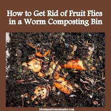 How To Get Rid Of Flies In The Backyard by How To Get Rid Of Fruit Flies In A Worm Compost Bin Montana