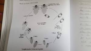 honey bee diagram explanation ielts writing task 1