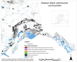 Alaska vegetaion images Alaskan black cottonwood jpg