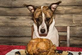 5 tips for a safe thanksgiving with dogs