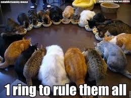 Cats Memes - 1 ring to rule them all cat meme cat planet cat planet