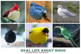 angry birds birds angry birds