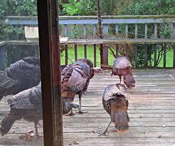 wildlife watching in backyard