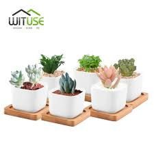 Tooth Shaped Planter Small Ceramic Flower Pots Sheilahight Decorations