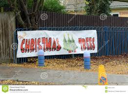 christmas trees for sale sign stock image image 48517497