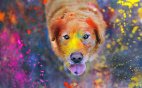 Face Paint Spray - download wallpaper 2560x1600 dogs paint spray face 2560x1600 hd