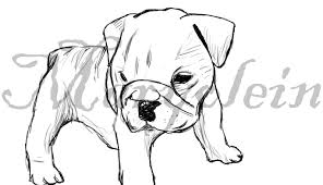 drawn bulldog bulldog puppy pencil and in color drawn bulldog