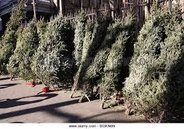 christmas tree on village green stock photos u0026 christmas tree on